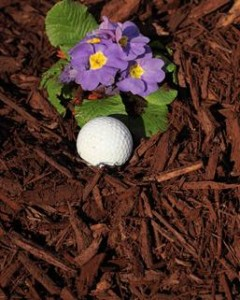257_Brown_Colored_Mulch_Portrait
